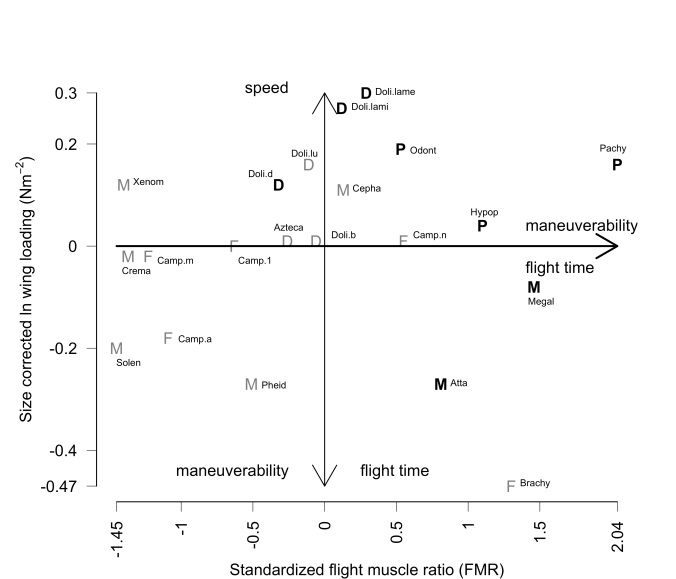 Each ant species has its own unique body type—shown here as flight muscle ratio and wing loading—that impacts how it flies.  Queens located on the right or bottom of this figure likely are more maneuverable and have higher flight endurance for their body size, whereas those on the top probably have faster, but shorter, flights. (Figure from Helms & Kaspari 2015, Insectes Sociaux 62:171-181)