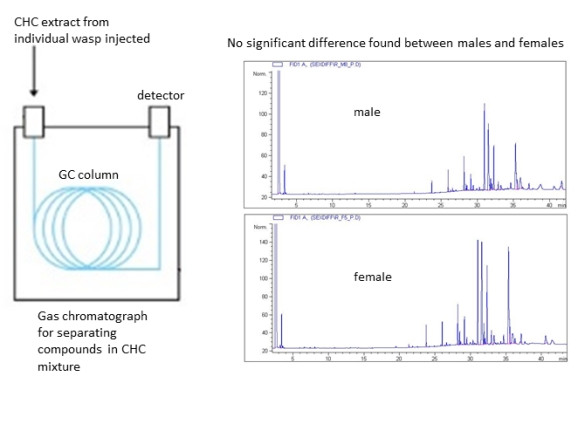FIg. 2: A representation of the gas chromatography (GC) device that detects the chemical components present in the CHCs of male and female wasps. We found no significant differences in the CHC chemical profiles between male and female wasps.
