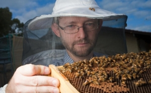 Curtin University Centre for Integrative Bee Research director Dr Boris Baer is concerned about bee biosecurity in Albany and Denmark. Picture: UWA