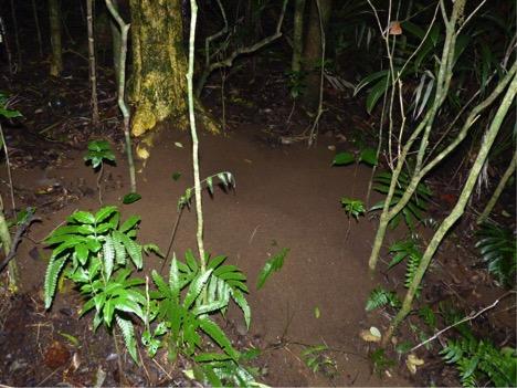 Excavated soil bivouac