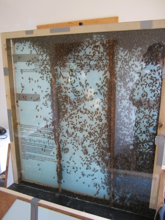 A swarm is installed.