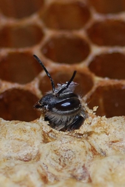 baby-bee