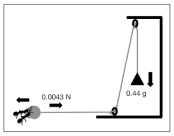 ant pulley
